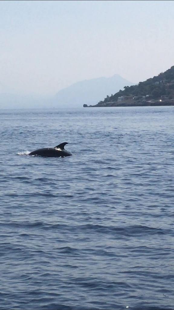 Sealife Palermo - Foto 39