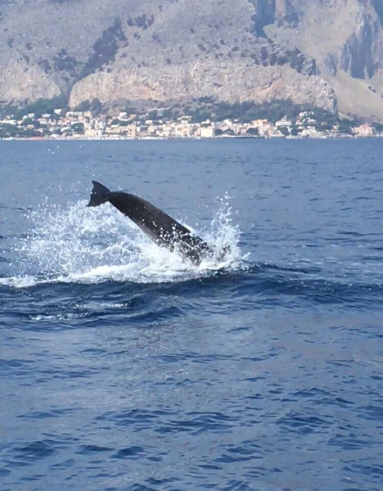 Sealife Palermo - Foto 40