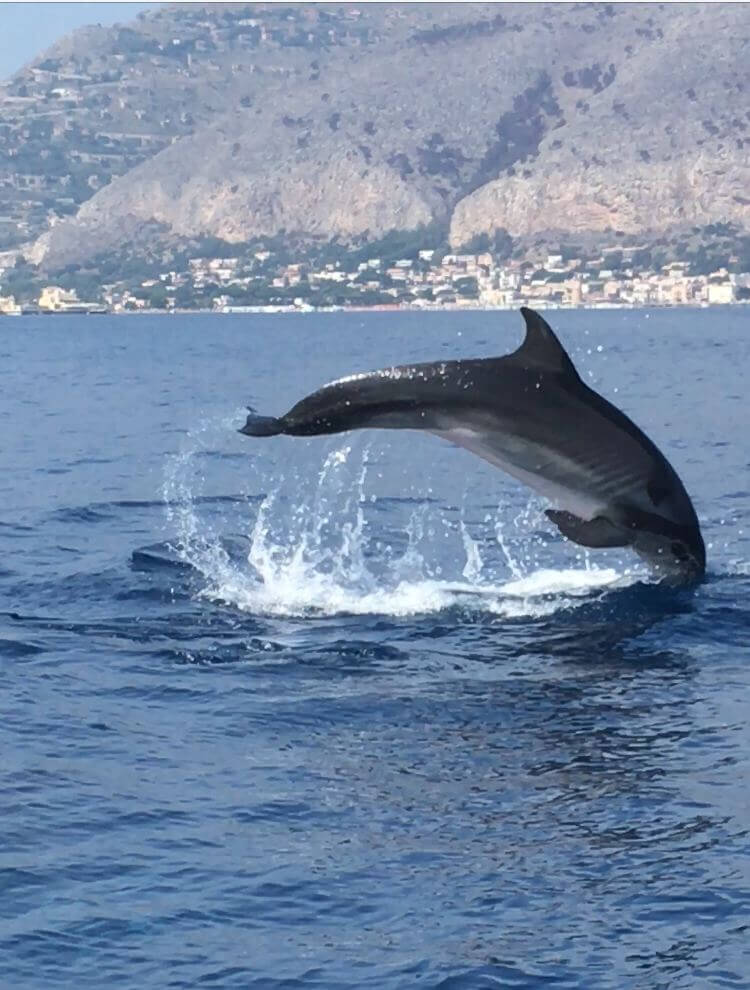 Sealife Palermo - Foto 41